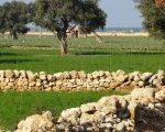 stone-walls-puglia-italy