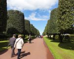 Parachute-Trees-American-Cemetery-Normandy-France