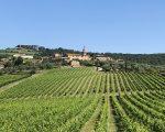 vines-village