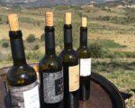 Catalonia Wine Tour (1)