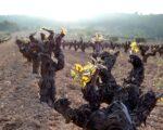 Catalonia Wine Tour (12)