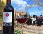 Catalonia Wine Tour (16)