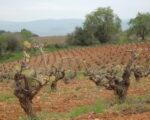Catalonia Wine Tour (17)