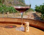 Catalonia Wine Tour (23)