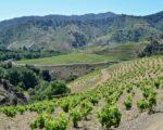 Catalonia Wine Tour (3)