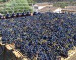 Catalonia Wine Tour (30)