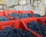 Catalonia Wine Tour (4)