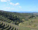 Catalonia Wine Tour (5)