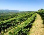 Wine Truffles Istria GALLERY (10)