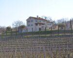 Wine Truffles Istria GALLERY (4)