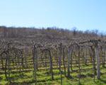 Wine Truffles Istria GALLERY (6)