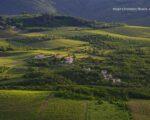 Wine Truffles Istria GALLERY (8)